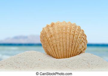 zee schaal, op het strand