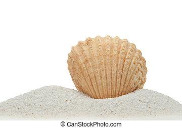 zee schaal, op, zand, vrijstaand, op wit