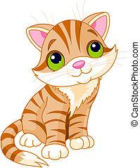 zeer, schattig, katje