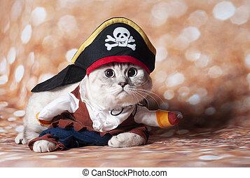 zeerover, kat, carribean