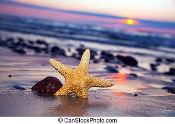 zeester, op het strand, op, ondergaande zon