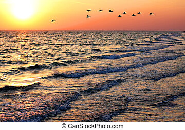 zeezicht, met, eenden, op, ondergaande zon