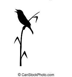 zeichnung, vektor, schilfgras, vogel, sitzen