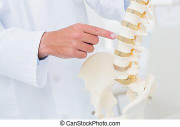 zeigen, doktor, rückgrat, anatomisch