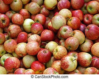zelândia, maçãs frescas, novo