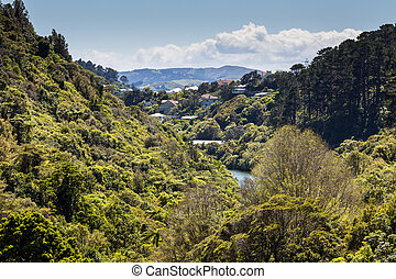 zelândia, novo, bush, lago, nativo
