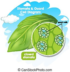 zelle, diagramm, pflanze, ausstellung