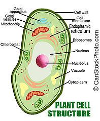 zelle, pflanze, struktur