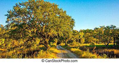 země cesta, linkovaný, s, dub, kopyto