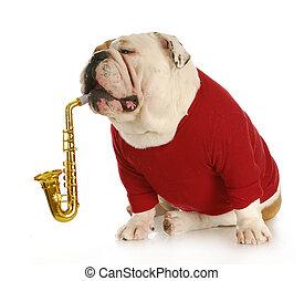 zenés, kutya