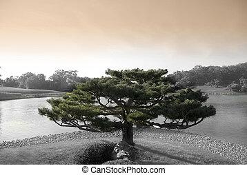 zen, arbre