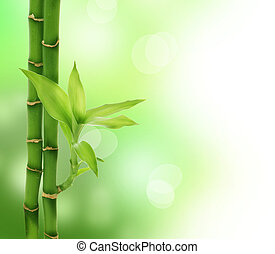 zen, bambù