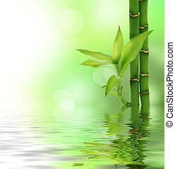 zen, bamboe
