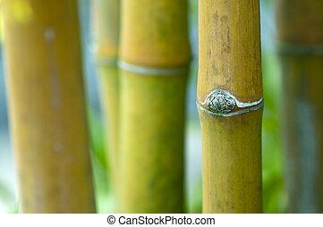 Zen bamboo.