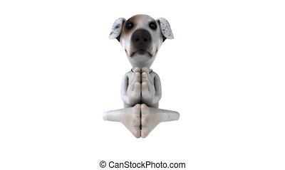 zen, chien