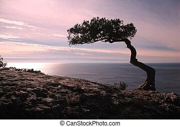 zen, encima, árbol, rocas, ocaso, mar, acantilado