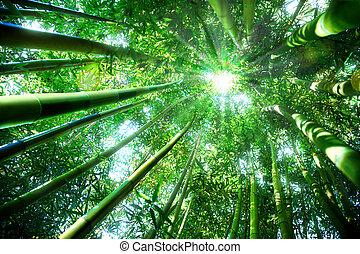 zen, -, forêt bambou, concept