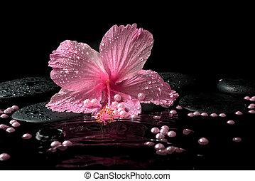 zen, hermoso, rosa, delicado, piedras, balneario, hibisco, ...
