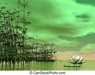 Zen nature - 3D render - One white lily flower next to ...