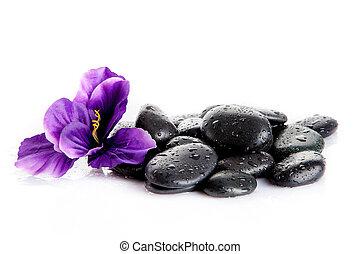 Zen pebbles. Black spa stones isolated on white