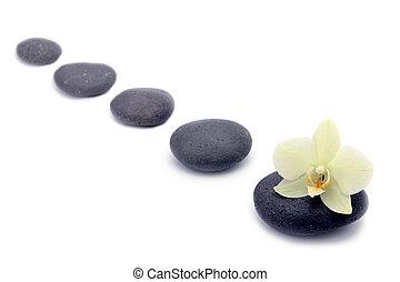 zen, pedras, com, orquídeas, flor, isolated., spa, fundo