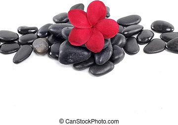zen, piedras, con, rojo, frangipani, flor, y, texto, espacio