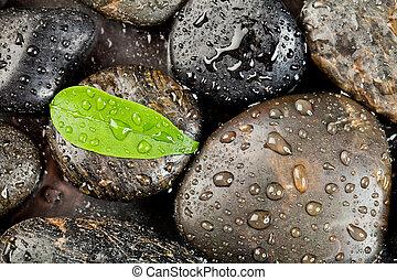 zen, pietre, e, freshplant, con, gocce acqua