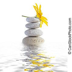 zen, spa, pedras, com, flor
