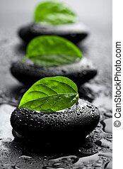 zen, stenen, en, bladeren, met, waterdruppels