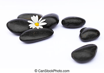 Zen stones and blossom on white background