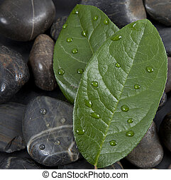 zen stones and leaves with water drops, isolated. spa background