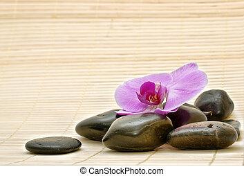 zen, storczyk, różowy, kamienie