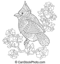 Zentangle stylized cardinal bird - Coloring page of northern...