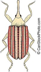 Zentangle stylized cartoon beetle insect, isolated on white background. Sketch for adult antistress coloring page. Hand drawn doodle, zentangle, floral design elements for coloring book.