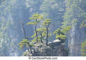 zhangjiajie, nemzeti erdő, liget