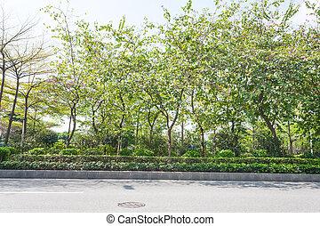 zhujiang, printemps, parc, arbres, rue, vert