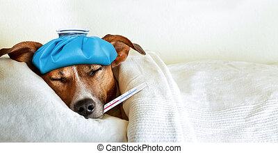 ziek, dog, ziek