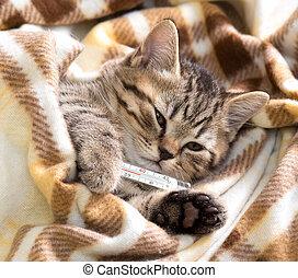 ziek, katje, het liggen, met, hoge koorts