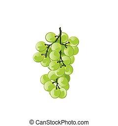 zieleń biała, winogrono, tło, ilustracja