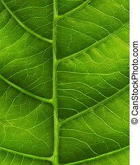 zieleń liść szczelnie-do góry