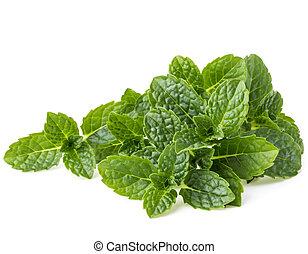 ziele, liście, odizolowany, tło, świeży, biały, mennica, cutout