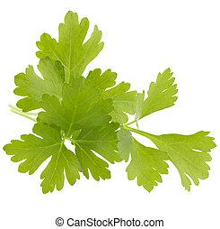 ziele, liście, tło, cutout, świeży, odizolowany, biały, ...