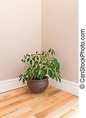 zielona roślina, w pokoju, róg