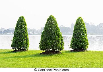 zielona trawa, drzewo
