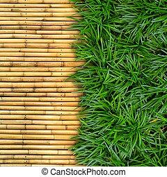 zielona trawa, na, bambus, tło.