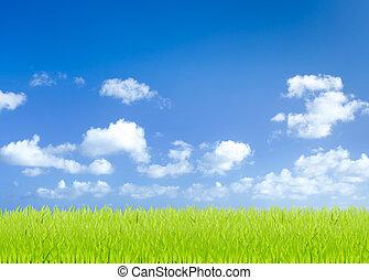 zielona trawa, pola, z, błękitne niebo, tło
