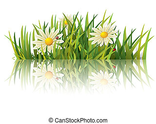 zielona trawa, z, biedronka