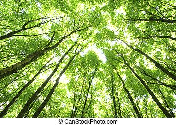 zielone drzewa, tło