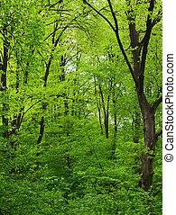 zielone drzewo, las