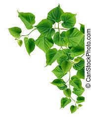 zielone listowie, brzeg